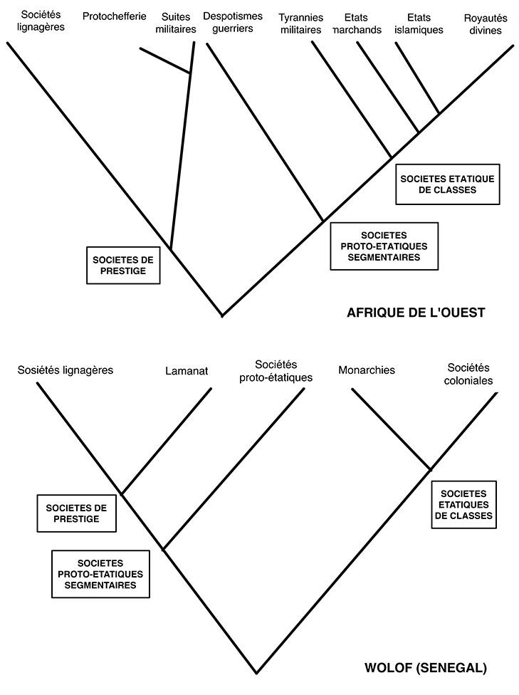 Fig. Analyse cladistique de la société wolof comparée à l'ensemble des sociétés ouest-africaines