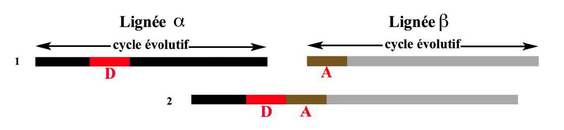 Fig. 5. Situations différentes de la lignée β (Boëda 2013, fig. 153).