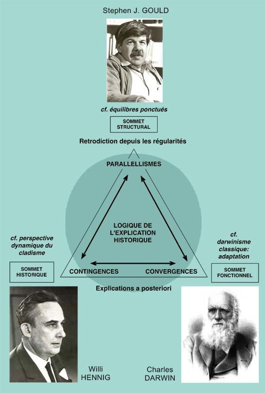 Figure 1. Modèle triangulaire de l'analyse historique. D'après Gould 2006, fig. 10-10 et 10-11a, b et c. Modifié.