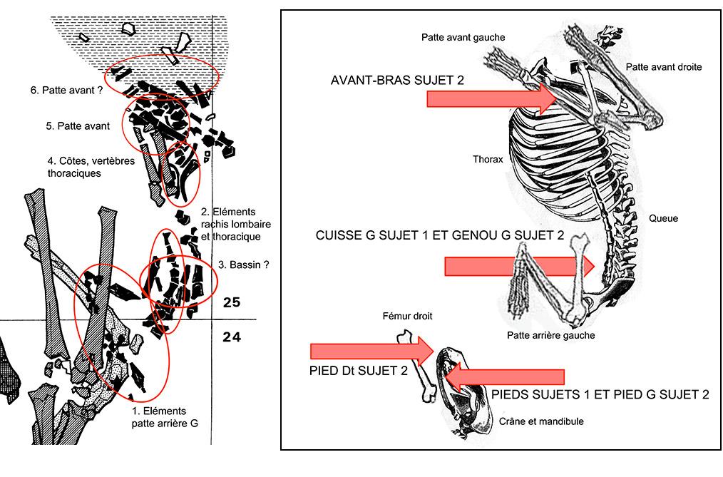 Fig. 3. Santhiou Kohel (Sénégal). Sépulture centrale du tumulus 43. Analyse des restes squelettiques du chien et identification des partie squelettiques originales permettant de restituer la découpe des quartiers et leurs positions par rapport aux deux premiers individus inhumés.