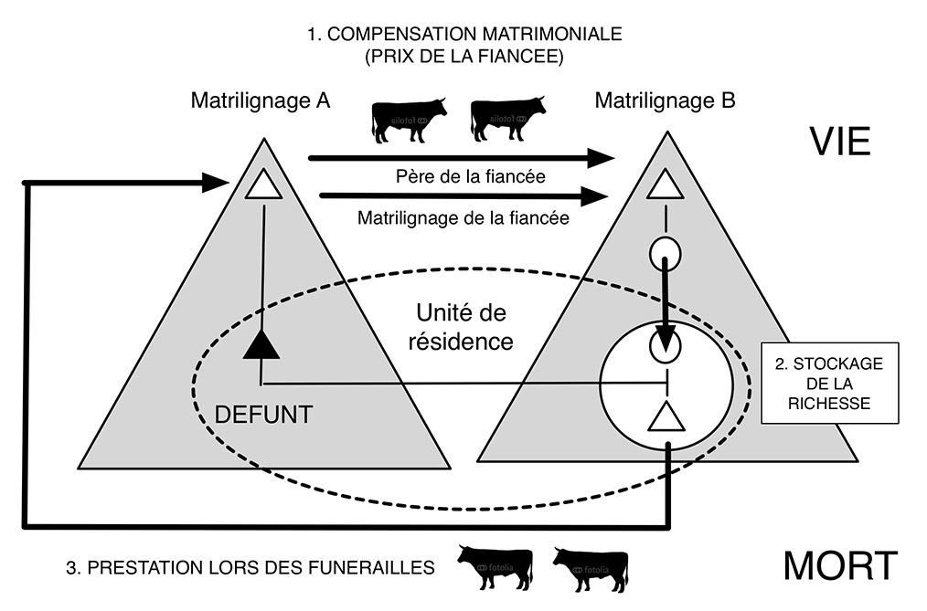 Fig. 6. Système de prestations - contre-prestations liant compensations matrimoniale et dons lors des funérailles. Schéma A. Gallay établi à partir des données de Dupire 1977.