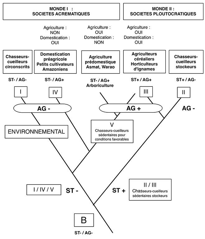 Fig. 6. Arborescence cladistique recomposée à partir de l'arbre proposé par Testart dans sa figure 34.