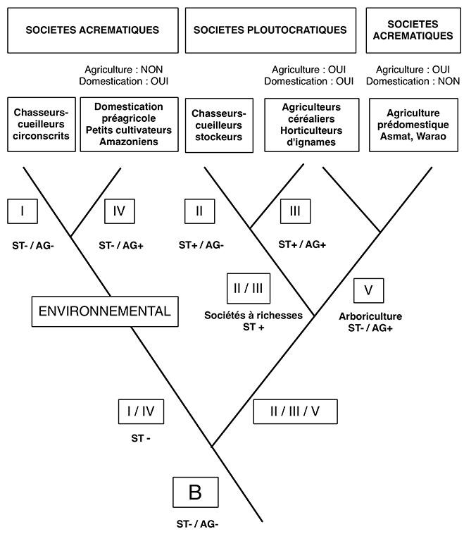 Fig. 5. Arborescence cladistique recomposée à partir de l'arbre proposé par Testart dans sa figure 29.