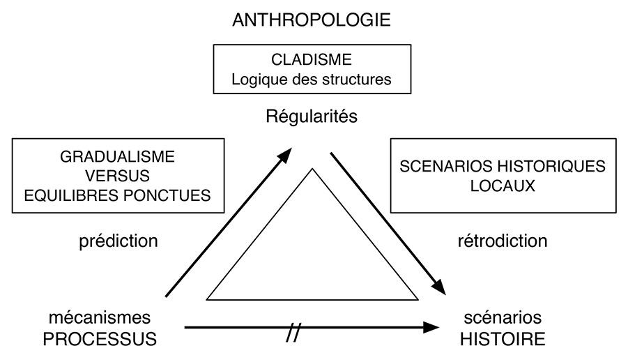 Fig. 7. Relations possibles entre le cladisme et les théories évolutionnistes en biologie