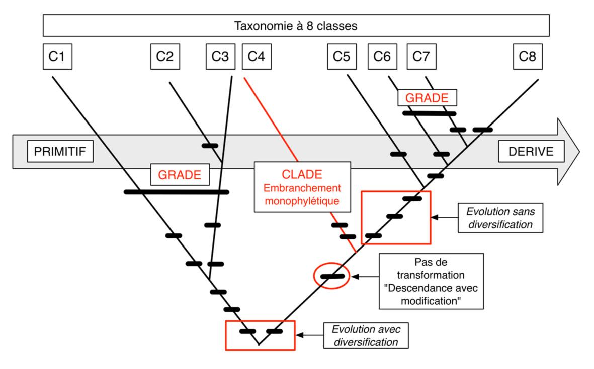 FIG2 Cladistique THEORIE