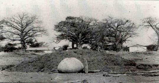 Fig. 12. Un cimetière sérer proche du village. On distingue, au pied des baobabs, trois toits de huttes recouvrant des tombes. Archives nationales du Sénégal.