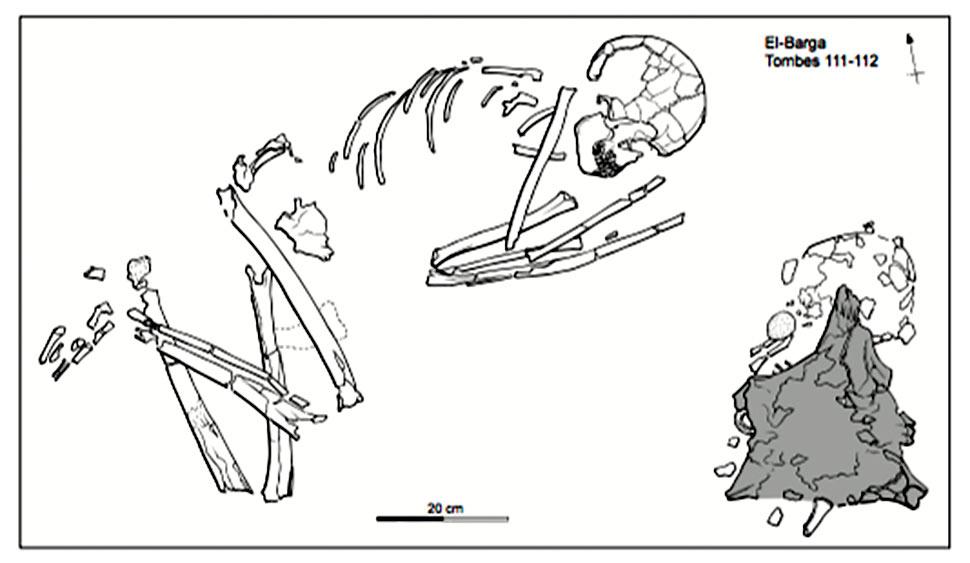 Fig. 14. El Barga. Tombe d'un homme de plus de 35 ans, disposé face à celle d'un enfant de deux ans. Un crâne de bœuf domestique a été déposé sur la sépulture d'enfant, face contre terre, les cornes dirigées vers l'est (en grisé) (Honegger 2005, fig. 17).