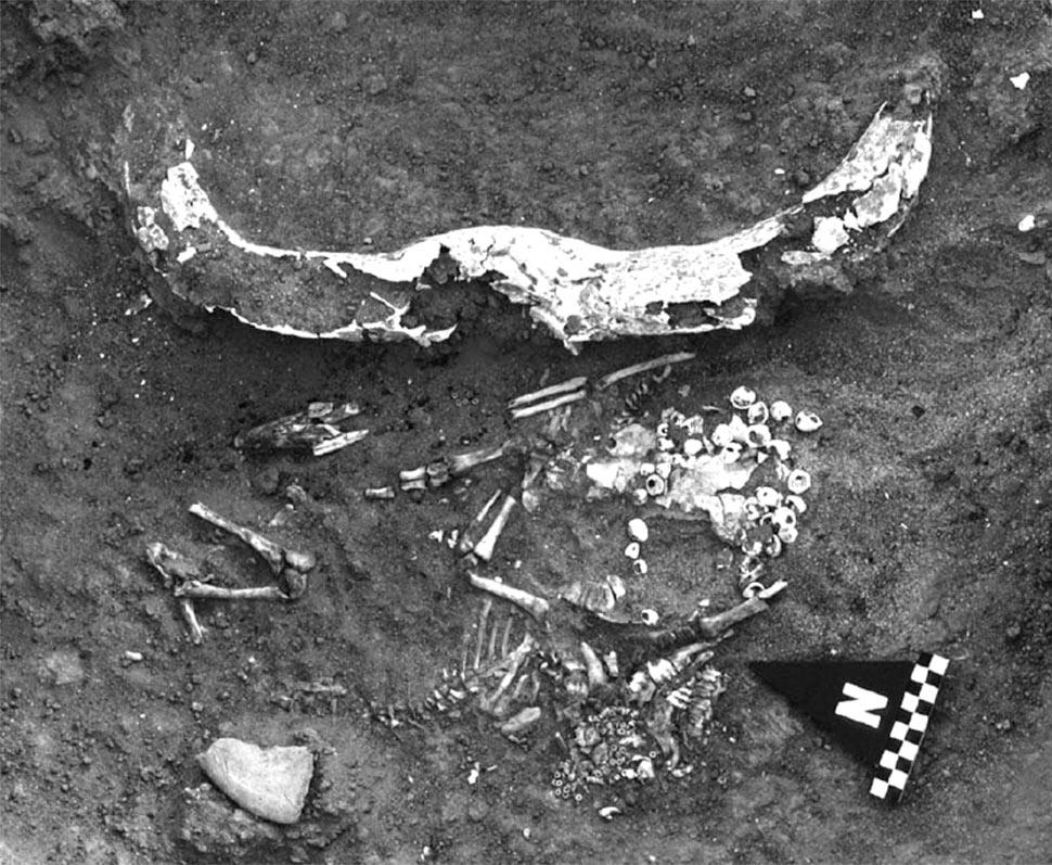 Fig. 15. Kadruka, cimetière KDK1, tombe d'enfant associé à un grand bucrâne, KDK1/58. Le corps de l'enfant est patiellement situé sous un second bucrâne; une résille de Nérita luis couvre la tête. Derrière lui un cadavre de jeune mouton portant un collier de perles en amazonite (Reinold 2005, fig. 7).
