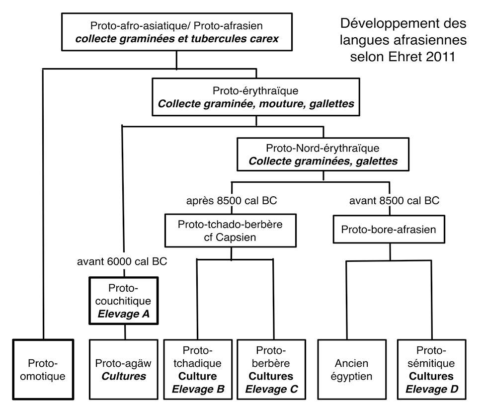 Fig. 6. Place des innovations économiques dans le développement du phylum afrasien d'après Ehret 2011. Les racines concernant l'élevage (A, B, C et D) sont distinctes et témoignent de développements autonomes. Les dates proposées par Ehret paraissent trop anciennes par rapport à la séquence du Soudan central, une référence qu'Ehret n'utilise pas.