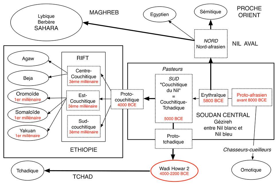 Fig.9. Histoire du phylum afrasien selon Blench 2006. Schéma A. Gallay incorporant les données sur l'histoire des langues couchitiques (Gallay 2016b, Ehret 1976).