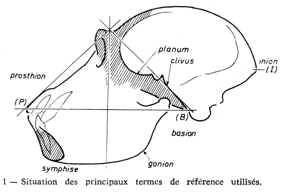 Fig. 7. Situation des principaux termes de référence utilisés (LG, fig. 1).