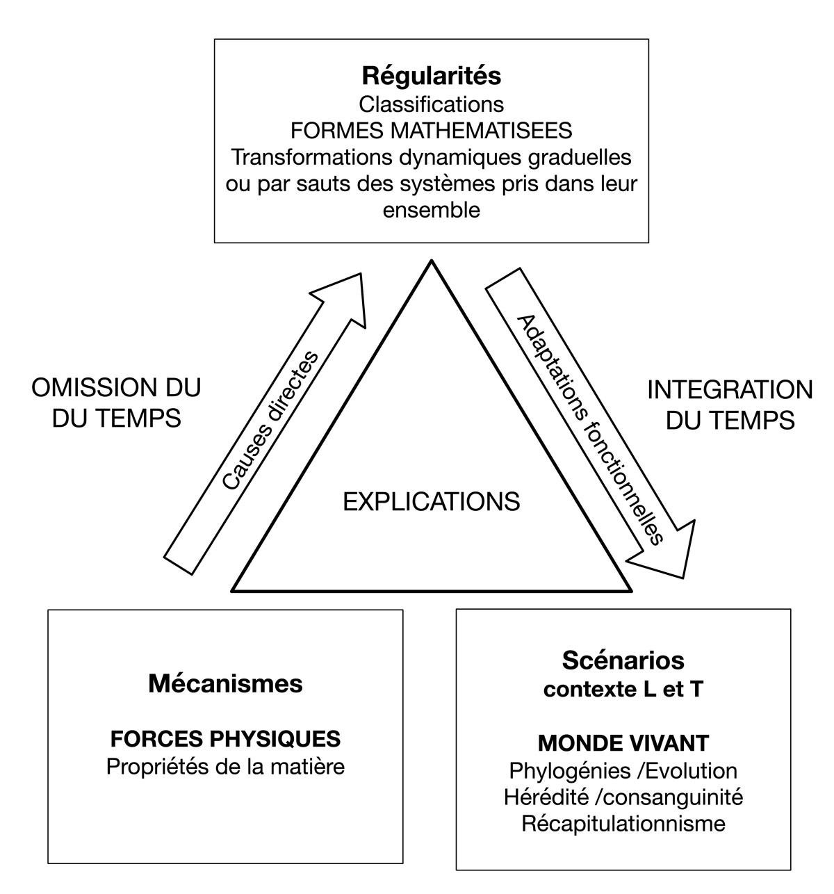 Fig. 5. Les contraintes temporelles dans le processus interprétatif de D'Arcy Thomson. © Gallay.